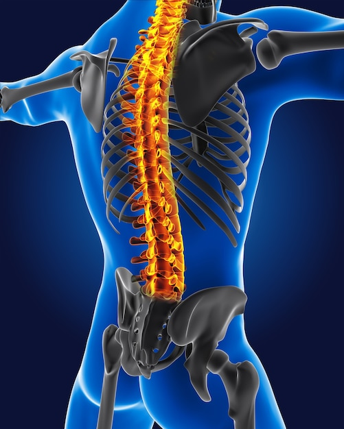 3d medical man with skeleton spine highlighted Free Photo