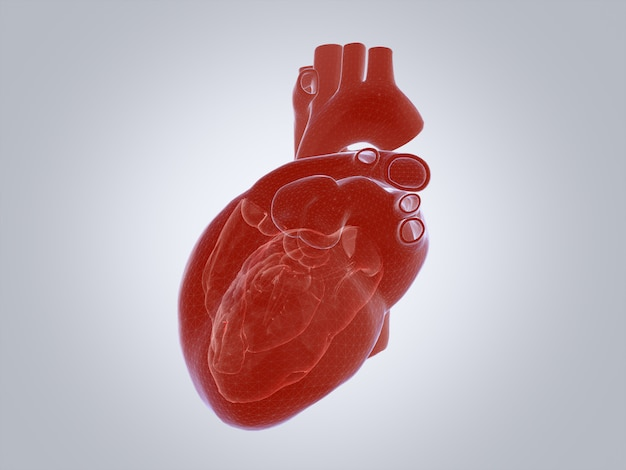 3d render of the human heart, x-ray mode. Premium Photo