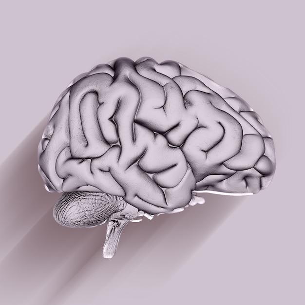 Rendering 3d di un background medico con il cervello Foto Gratuite