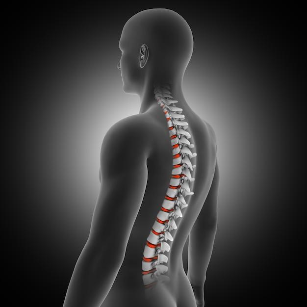 Rendering 3d di un background medico con figura maschile con colonna vertebrale e dischi evidenziati Foto Gratuite