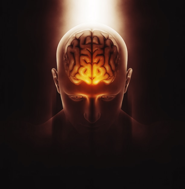 3d render of a medical image of a male figure with brain highlighted Free Photo