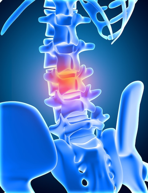 3d render of a medical skeleton with lower spine highlighted Free Photo