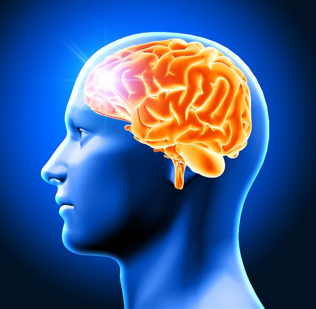 3d визуализации мужской головы с указанием мозга Бесплатные Фотографии