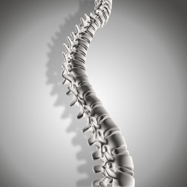 3d render of spine Free Photo