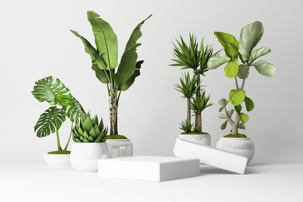 3d render of tropical plants isolated on white Premium Photo