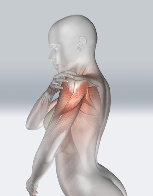 3d женская фигура держит плечо с мышц зрения Бесплатные Фотографии