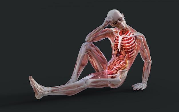 Иллюстрация 3d мужской системы скелетной мышцы, косточки и пищеварительной системы с путем клиппирования Premium Фотографии