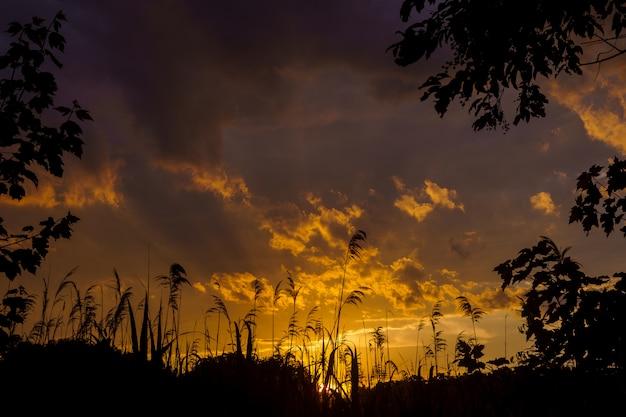 日没または日の出葦と太陽。夕方には自然。水に沈む夕日。風をつかむ草の耳。夕日から赤い空。 4kビデオ Premium写真
