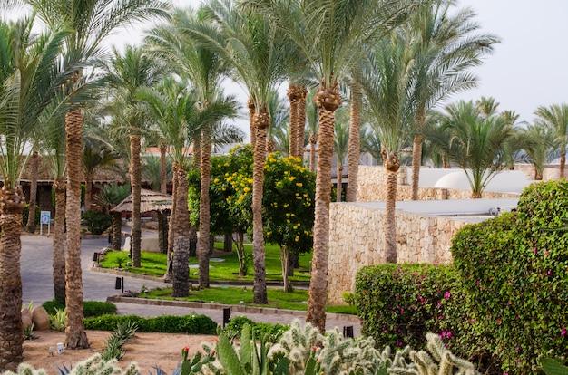シャルムエルシェイクの5つ星ホテルの手入れの行き届いた公園の領土。 Premium写真