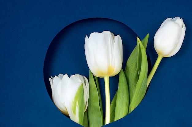 Вид сверху тюльпаны и подарочная коробка с копией пространства. фон для женского дня, 8 марта день святого валентина, 14 февраля. Premium Фотографии