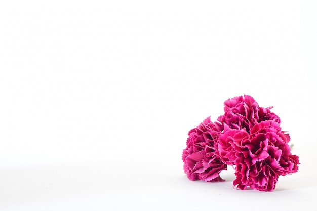 8 march women's day carnation Premium Photo