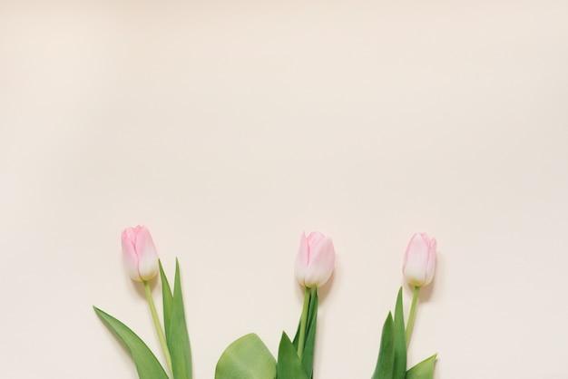 Концепция весеннего утра. розовые тюльпаны на белом фоне, вид сверху с пространством для вашего текста. праздничная открытка на день матери, день святого валентина, 8 марта Premium Фотографии