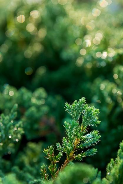緑の苔背景テクスチャ自然の中で美しい Premium写真