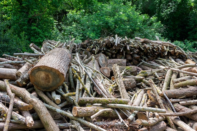 森の端に挽きたての木 Premium写真