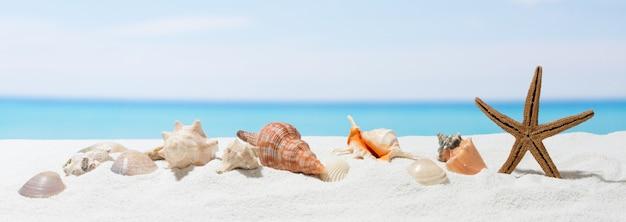 白い砂とバナー夏の背景。ビーチで貝殻とヒトデ。 Premium写真