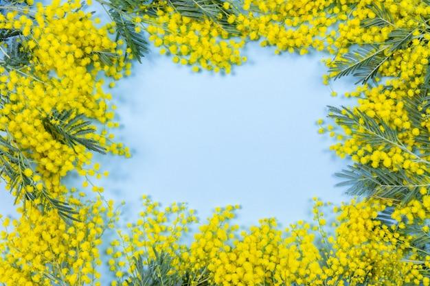 青の背景にミモザの花のフレーム。 Premium写真