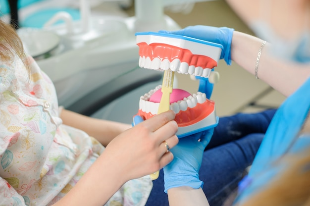 歯科医の診療所で患者に歯科顎モデルを示す歯科医 Premium写真