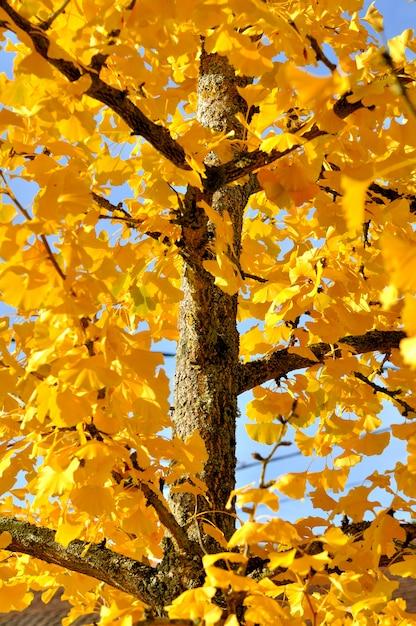 黄金の葉 Premium写真