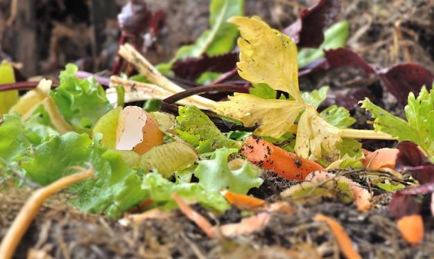 コンポストで野菜の皮やその他の消化性廃棄物を閉じる Premium写真