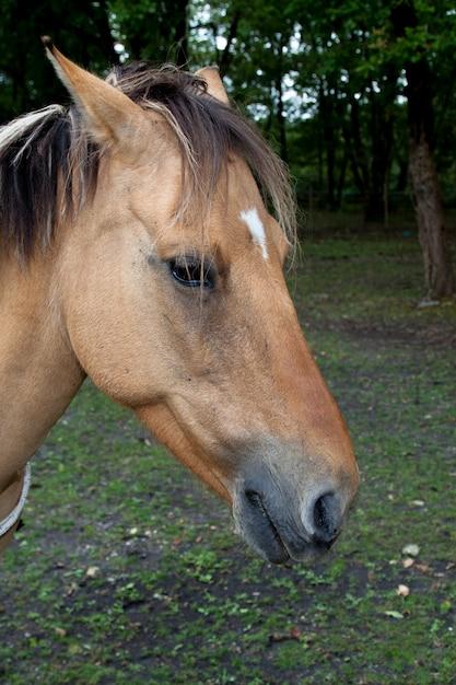 公園の馬 Premium写真