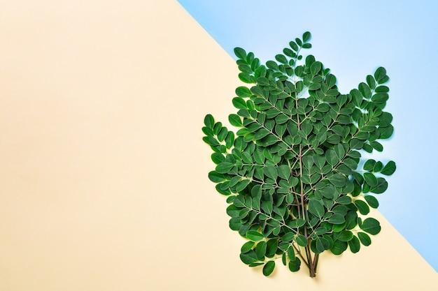 Свежие листья моринги на желтом и синем фоне Premium Фотографии