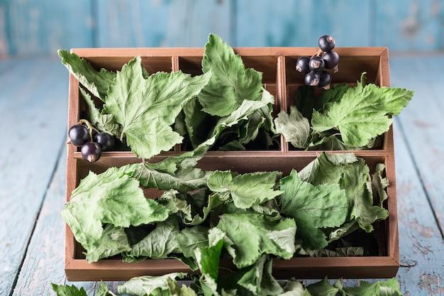 ブラックカラントの葉を箱に入れて乾燥させる Premium写真