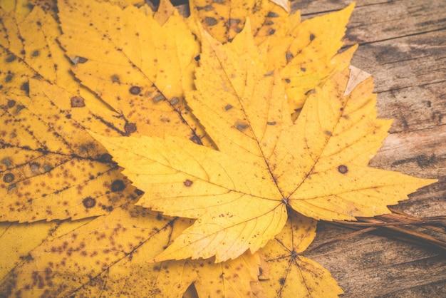 木製の背景に秋の葉 Premium写真