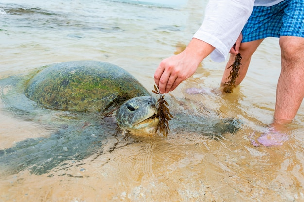 гигантские черепахи на шри ланка фото дворце культуры работают