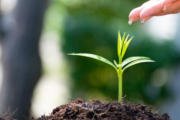 女性の手の植栽と若い緑の植物に水をまきます。 Premium写真