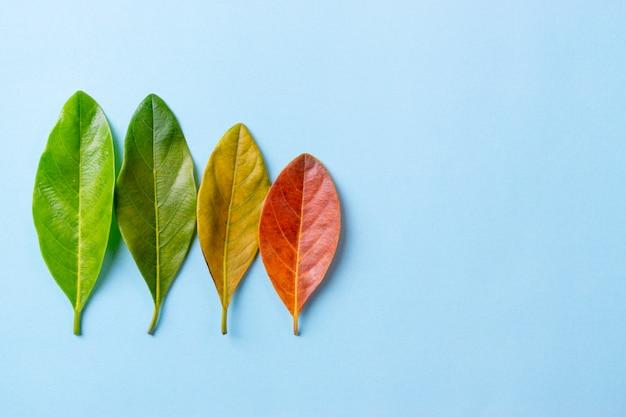 赤、オレンジ、赤の紅葉 Premium写真