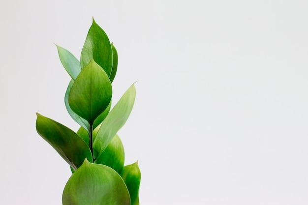白い背景の上の緑の葉 Premium写真