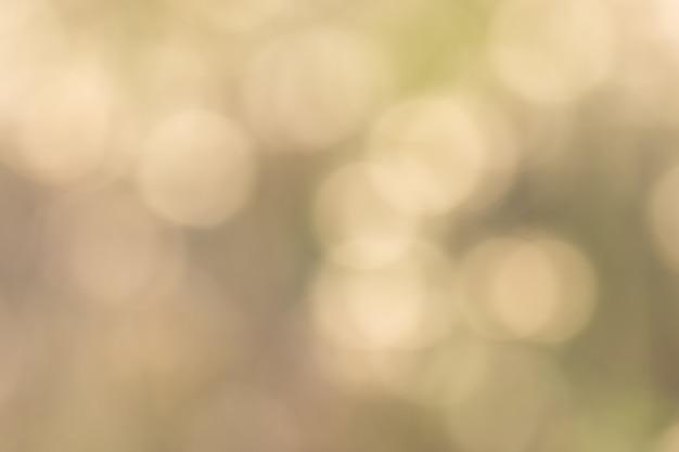 自然光からのボケ味 Premium写真