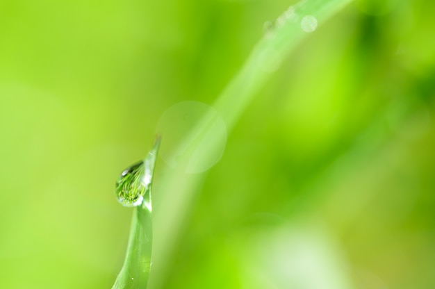 Концепция любви мира зеленой окружающей среды Premium Фотографии