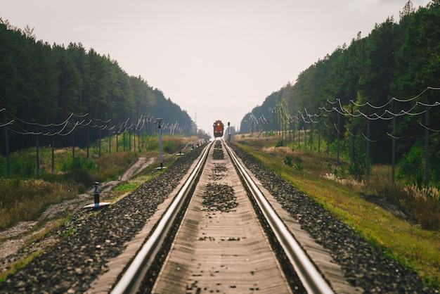 神秘的な列車は森林に沿って鉄道で移動します。 Premium写真