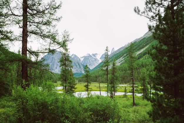 Заводь горы за хвойными деревьями против гигантских снежных гор. поток воды в ручье. богатая растительность и хвойный лес высокогорья. удивительный атмосферный ландшафт величественной природы. Premium Фотографии