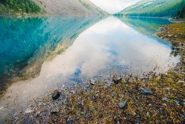 きれいな水のクローズアップと山の湖の底と端の植物と石。巨大な山が滑らかな水面に映りました。水中植物の背景。山腹の反射。 Premium写真