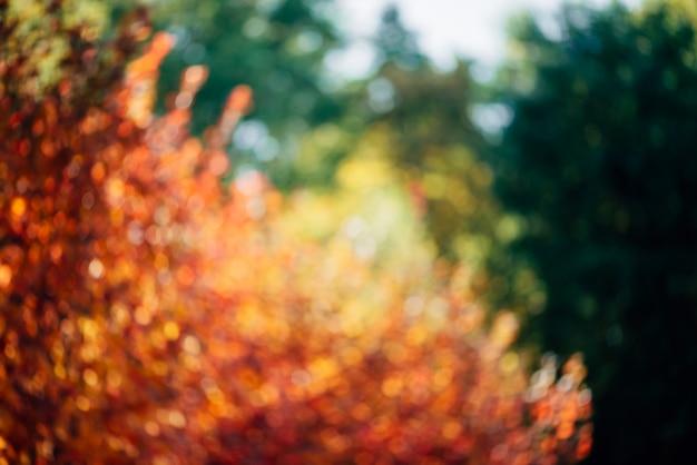 緑豊かな多彩な群葉のぼやけた質感。 Premium写真