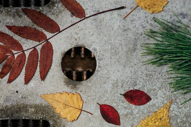 Яркий осенний гербарий, расположенный на металлической поверхности, поврежденной коррозией. Premium Фотографии