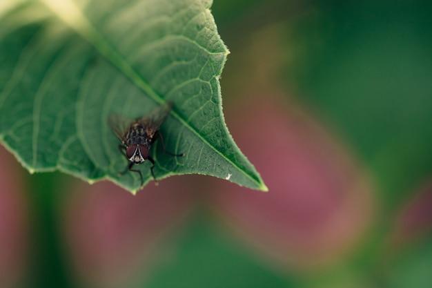 黒いハエは植物の緑の葉の上に座っています。 Premium写真