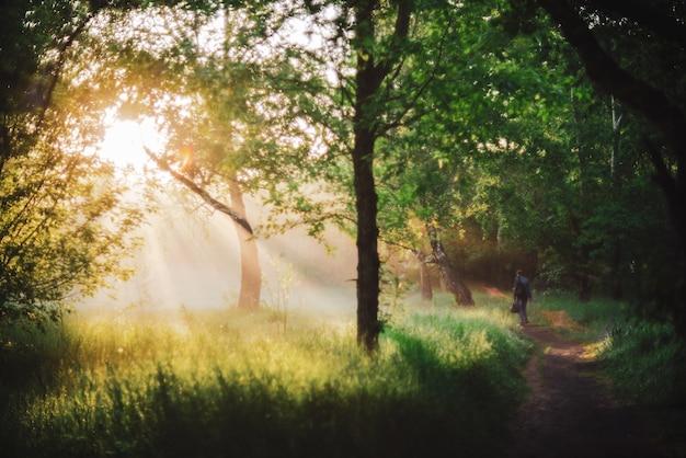 男は朝の日差しの中で公園を散歩します。日の出の男の後ろ姿。太陽光線とレンズフレア、コピースペース付き。ぼやけた日当たりの良い背景。明るい太陽が木の葉を通して夕日に輝いています。ぼやけた背景 Premium写真