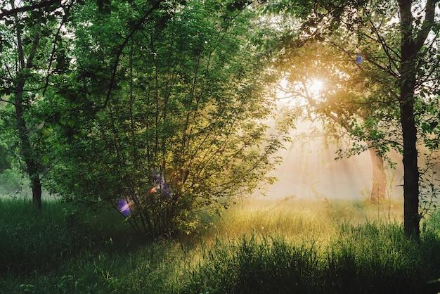 風光明媚な日当たりの良い緑の風景。日光の下での朝の自然の風景。日の出の木のシルエット。コピースペースを持つ群葉に太陽光線とレンズフレア。明るい太陽が木の葉を通して夕日に輝いています。 Premium写真