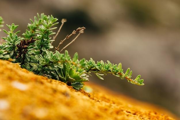 山の表面の多肉植物とコケのマクロ写真。 Premium写真