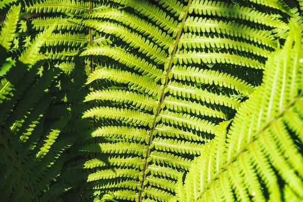 シダのクローズアップの大きな緑の葉 Premium写真