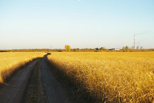 コピースペースと澄んだ青い空の下で日光の下で金小麦のフィールドを未舗装の道路 Premium写真