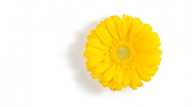 黄色のガーベラの花の分離 Premium写真