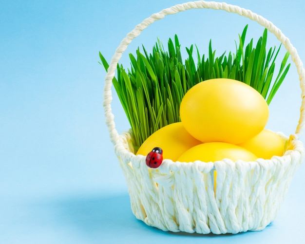 Красочные пасхальные яйца в корзине с декоративной травой. синий фон концепция праздника пасхи. Premium Фотографии