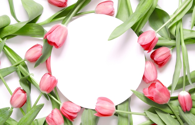 白い背景の上のチューリップの花と花の背景。 Premium写真