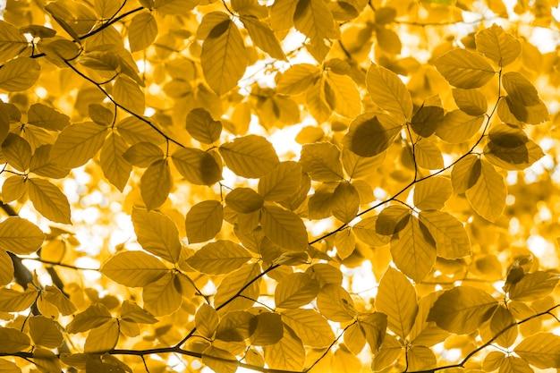 自然の黄色の葉の森の背景のクローズアップ Premium写真