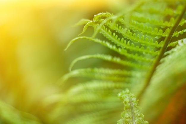 Крупным планом свежего ярко-зеленого папоротника весной с солнечной вспышки Premium Фотографии