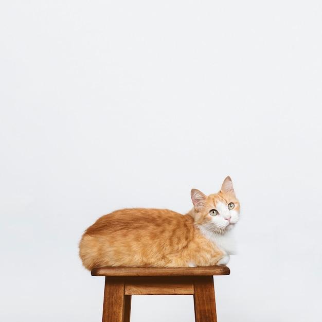 椅子に座っている猫 無料写真